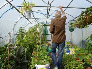 Harvey's greenhouse