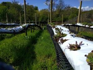 Islay House community garden 2