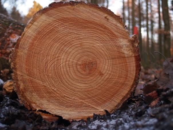 Vermont oak
